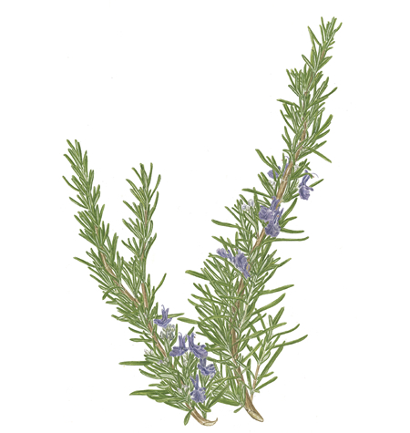 Rosemary In Dog Food